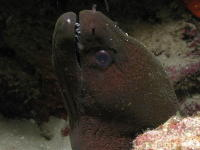 Moray Eel - MZ Photo